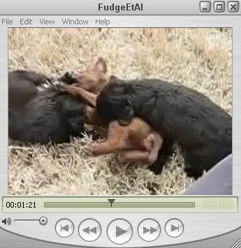 Puppies! Puppies! Puppies!