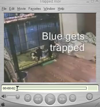 Blue Gets Trapped