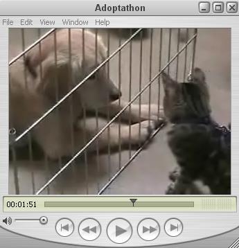 Adopt-a-Thon
