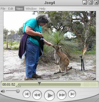 Cavorting with Kangaroos