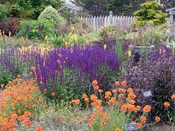 garden1.jpg (84322 bytes)