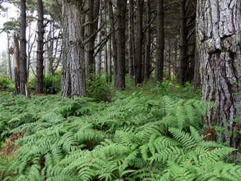 woods.jpg (74032 bytes)