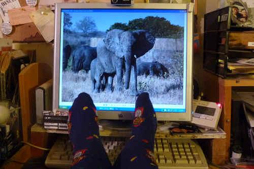 AfricaSox.jpg (76675 bytes)