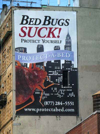 NYBedBugs.jpg (69718 bytes)