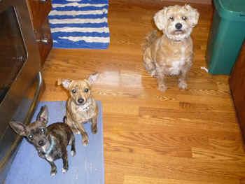 DogsWaiting.jpg (49605 bytes)