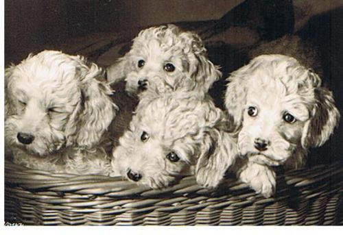 dogpostcard.jpg (35674 bytes)