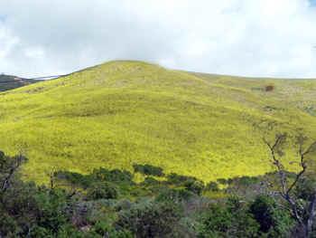 mustardhill.jpg (47377 bytes)