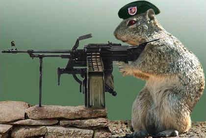 squirrel-wars.jpg (21143 bytes)