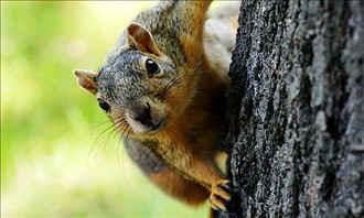 squirrel.jpg (24846 bytes)