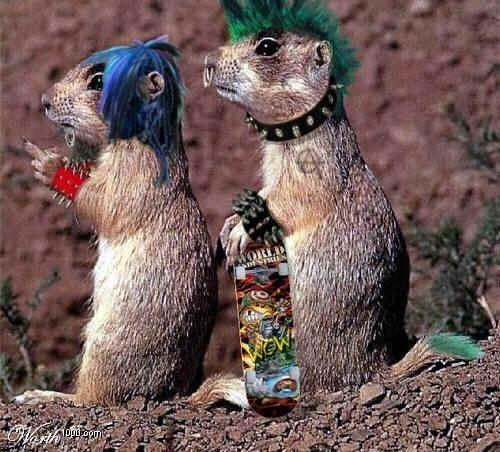 squirrels punks august 7, 2011