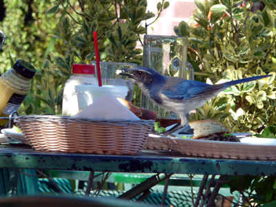 BirdLunch.jpg (192324 bytes)
