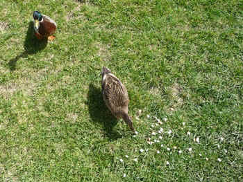 2ducks.jpg  (85023 bytes)
