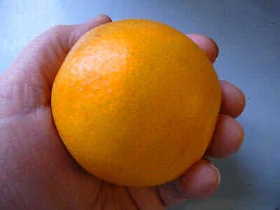orange.jpg (30705 bytes)