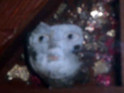 Face.jpg (155192 bytes)