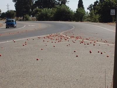 tomato_spill.jpg (46186 bytes)