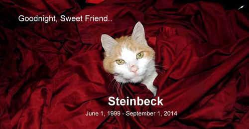 steinbeckcat.jpg (121176 bytes)